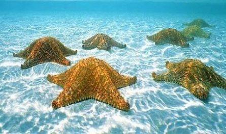 Estrella de mar, se alimentan ojo en cada brazo, Anders Garm, biólogo marino de la Universidad de Copenhague (Dinamarca)