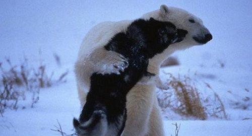 oso polar y perros canalmenorca.com