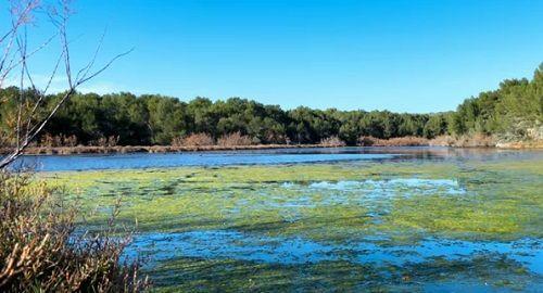 Parque Natural de S'Albufera des GRAU
