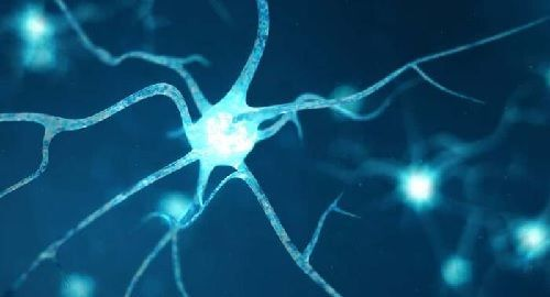 Medicina, Neurogénesis, Neuronas, cerebro, aumentar, genética, células, encéfalo, memoria, canalmenorca.com