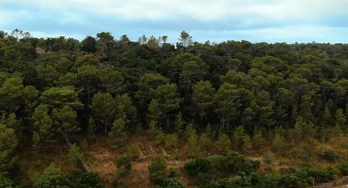 El lado verde de Menorca